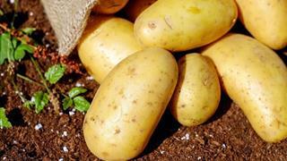 Cách dùng khoai tây chữa đau dạ dày cực an toàn và hiệu quả
